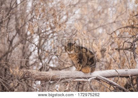An orange brown and black streaked cat perched on a broken tree trunk with blurred autumn trees in the background