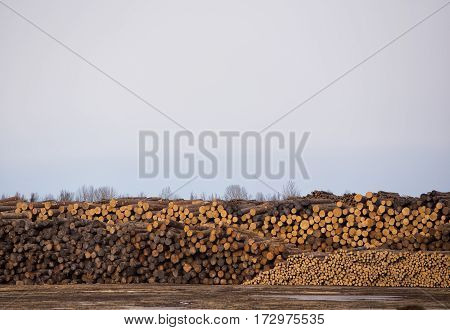 Rows of cut and stacked logs ready to be processed under an overcast sky