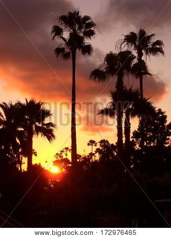 Palm Tree Silhouette Against a Los Angeles Sunset