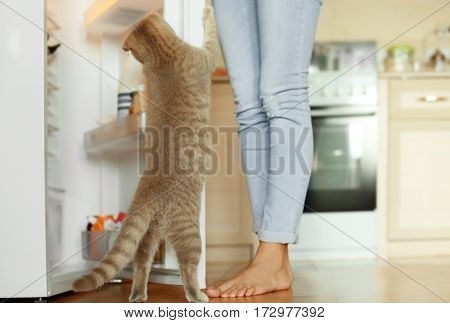 Cute curious cat looking into fridge