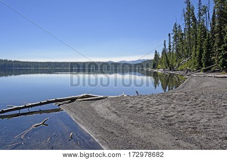 Shoshone Lake in the Morning in Yellowstone National Park in Wyoming
