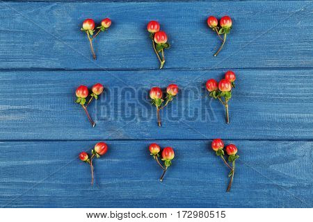 Beautiful hypericum on wooden background