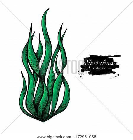 Spirulina seaweed powder hand drawn vector illustration. Isolated Spirulina algae on white background. Superfood artistic style drawing. Organic healthy food sketch