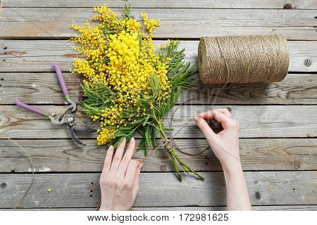 Woman hands make bouquet of mimosa. bandages twine and Gardening scissors on rustic wooden table.