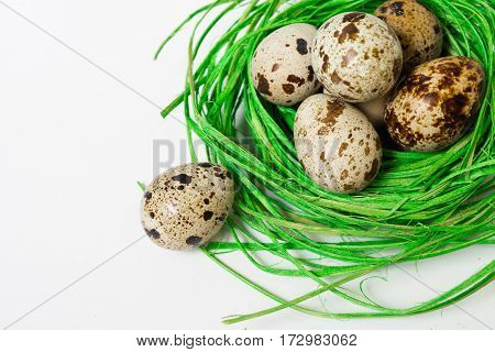 Green nest with quail eggs on the white background