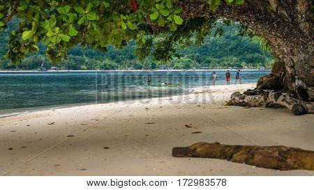 Huge Tree on Friwen Island, West Papuan, Raja Ampat. Indonesia