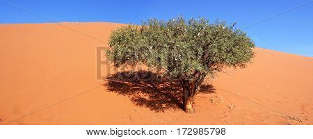 Dune 45 is a star dune in the Sossusvlei area of the Namib Desert in Namibia