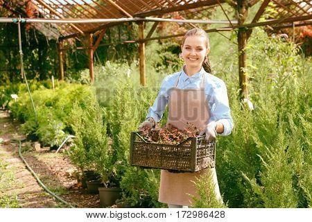 Pretty young gardener with decorative plants in plastic box