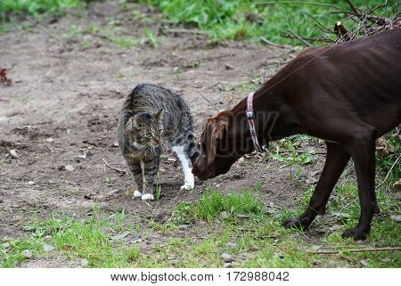 Striped cat and dog looking at each other