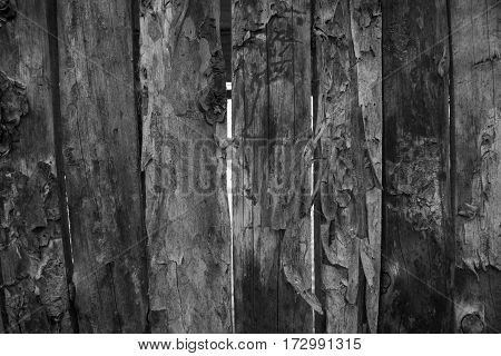 Old barn wood background texture,black and white