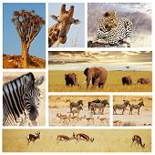 african safari collage poster