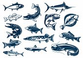 Fish vector tuna, pike and marlin, perch, bream, salmon and flounder, carp and mackerel sprat, sheatfish or catfish. Fishes blue symbols set for seafood restaurant, fishing club poster