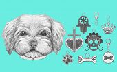 Portrait of  Havanese with dog-collar and collection of pendants. Hand drawn illustration. poster