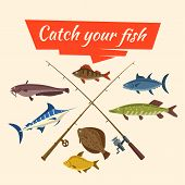 Fishing catch of vector fish sheatfish or catfish, marlin and perch, pike and flounder or salmon, tuna and carp, fisherman rods or fish-rods and fisher tackles baits and floats poster