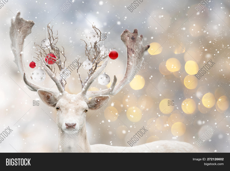 Portrait Christmas Image Photo Free Trial Bigstock