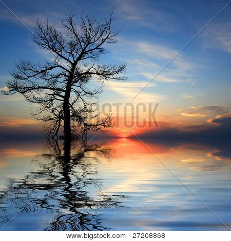Dead tree in water on sunset background