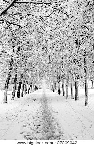 In winter park