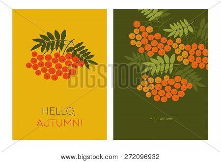 Hello Autumn Typography Color Illustrations With Rowanberry. Rowan Branches, Twigs With Red Berries