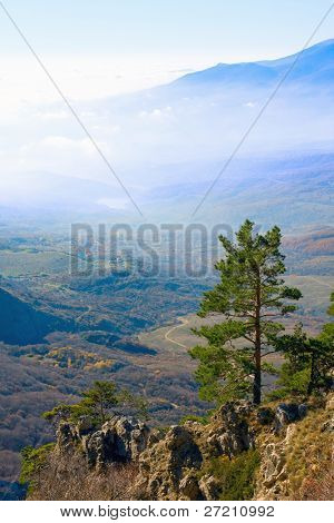 Nice landscape with pine in mountains and fog in valley