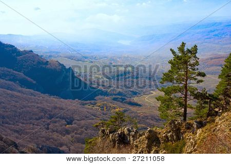 Lonely tree in mountains