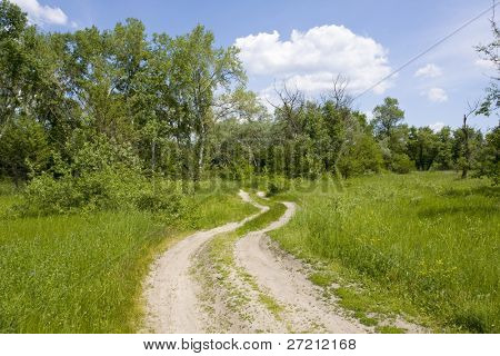 Road in forest on summer day