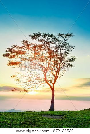 One tree sunset / The tree on slope hill mountain and beautiful sunrise with tree alone and sun sky yellow blue background