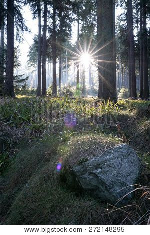 Spring Nature Background. Beautiful Forest At Sunrise With A Big Lensflare And Grass In The Foregrou