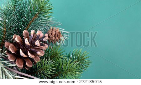 An image of a twig with pine cones background