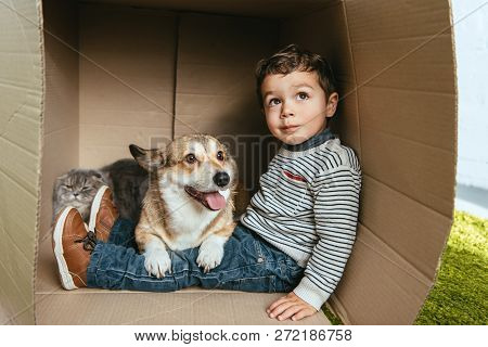 Selective Focus Of Boy With Adorable Corgi And British Longhair Cat Sitting In Cardboard Box