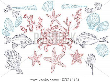 Set Sea Animals. Shell, Cuttlefish, Coral, Oyster, Crab, Shrimp, Seaweed, Star, Fish And Octopus. Ve