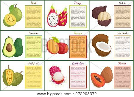 Bael And Pitaya Salak Posters Set With Text Sample Vector. Ripe Avocado And Rambutan, Mamey And Coco
