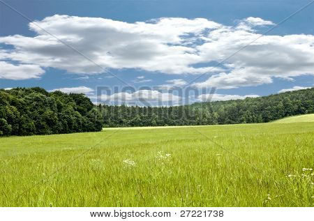Large beautiful spring the field with a distant kind on a forest