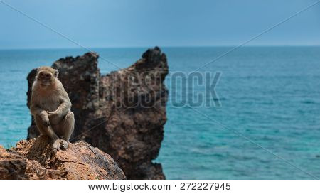 Monkey Beach Thailand Crab-eating Macaque Macaca Fascicularis Also Known As Long-tailed Macaque