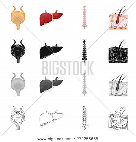 Vector Illustration Of Body And Human Sign. Collection Of Body And Medical Stock Vector Illustration