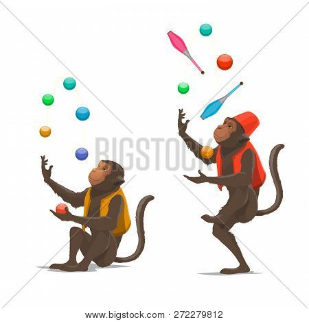 Trained Circus Monkey Juggling Balls Or Clubs Vector Isolated. Ape Juggler Gives Performance In Circ