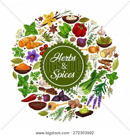 Seasonings Icon Of Herbs And Spices For Cooking. Grocery Store With Garlic And Saffron, Cardamom, Gi