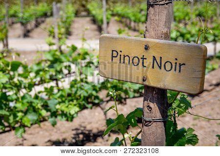 Pinot Noir Wine Sign On Vineyard. Vineyard Landcape