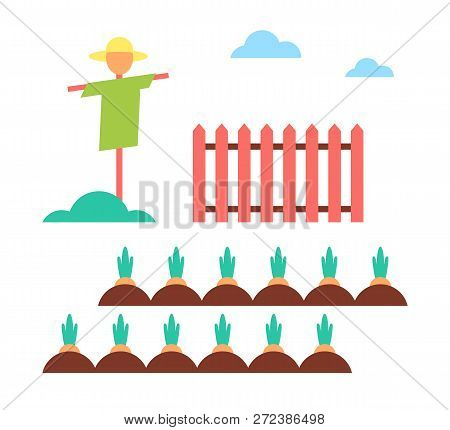 Scarecrow Field Protector Set Wooden Fence And Plantation With Growing Carrots. Farming Measures To