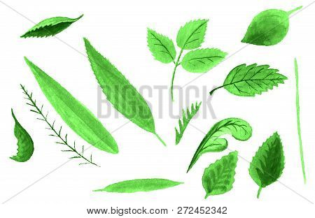 Set Of Watercolor Images Of Green Leaves And Stems On White Background.