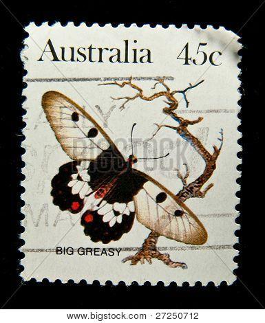 AUSTRALIA - CIRCA 1980s: A stamp printed in Australia shows butterfly Big Greasy, circa 1980s