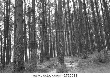 Grey Woods