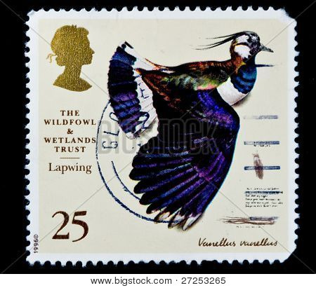 UNITED KINGDOM - CIRCA 1981: A British Used Postage Stamp Showing Lapwing Bird, circa 1981