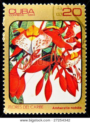 CUBA - CIRCA 1984: A stamp printed in Cuba shows Amherstia nobitis, series Caribean flowers, circa 1984