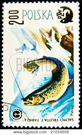POLAND - CIRCA 1979: A stamp printed in Poland shows fish Brown trout - Salmo trutta morpha fario, circa 1979