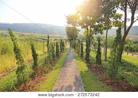 A Walkway In Hillside With Morning Sunlight.