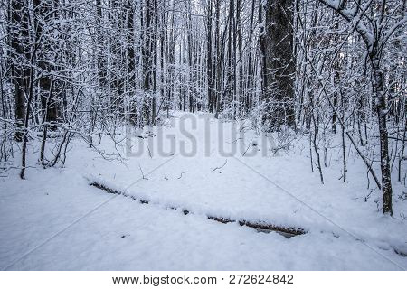 Haunted Forest. Winding Path Through A Dark Remote Forest Covered In Fresh Fallen Snow In Michigan.