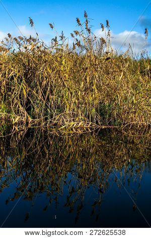 View On Autumn Landscape Of River And Grass In Sunny Day. Grass On River Coast In Autumn Day. Reflec