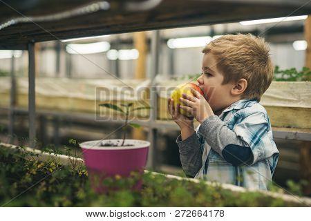 Healthy Food. Healthy Food For Healthy Child. Organic Food Concept. Small Boy Farmer Eating Healthy