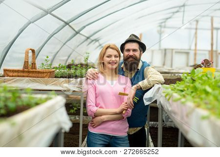 Couple In Greenhouse. Couple Working In Greenhouse. Greenhouse Couple Workers Planting Flowers. Fami