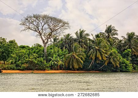 African Landscape. Stylish Bare Tree And Palm Trees With Water And Sky In Background. Beautiful Afri